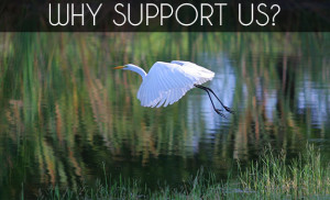 Why Support Us?