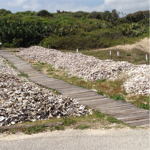 Stewardship Oyster Shell Recycling